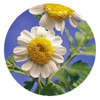Swedish Pollen Flower